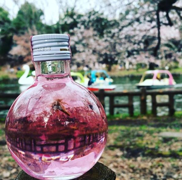 sakura bomb